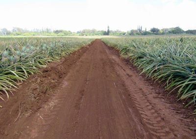 Hawaiian_Pineapples_Road.