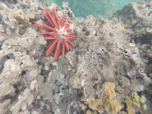 ReefSafe_Coral