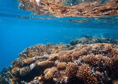 ReefSafe_Underwater