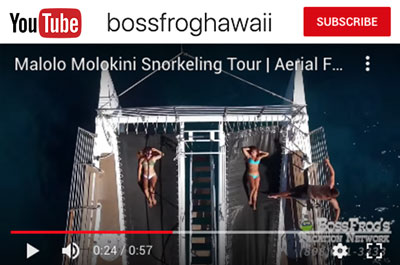 Boss Frog Hawaii Youtube