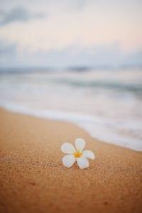 Healthy_Hawaii_Aloha