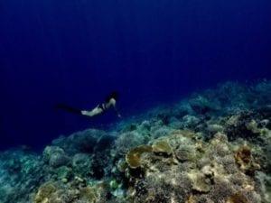 Healthy_Hawaii_Underwater