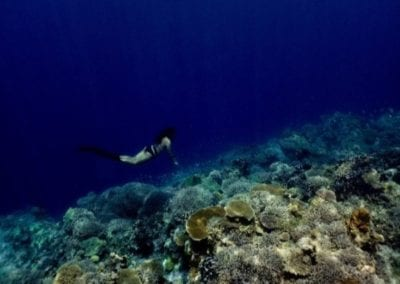 Healthy_Hawaii_Underwater