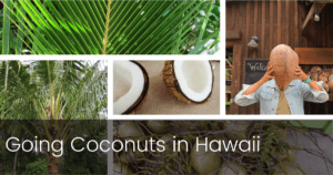 Going Coconuts in Hawaii