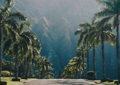 Hawaii_Vacation_Drive